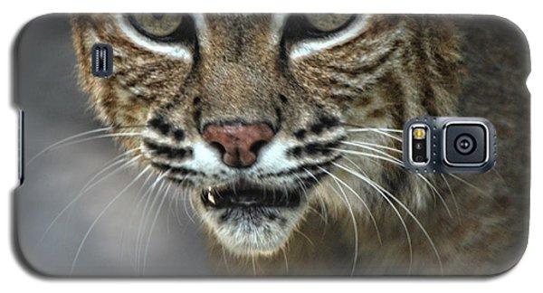 Bobcat Stare Galaxy S5 Case