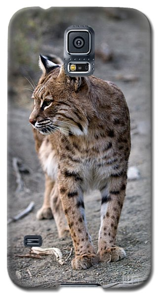 Bobcat Galaxy S5 Case