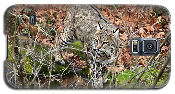 Galaxy S5 Case featuring the photograph Bobcat by William Tanneberger