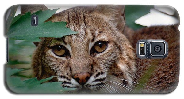 Galaxy S5 Case featuring the photograph Bobcat With Maple Leaves by Bradford Martin