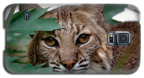 Bobcat With Maple Leaves Galaxy S5 Case