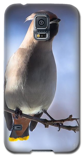 Galaxy S5 Case featuring the photograph Bohemian Waxwing Blue by Rose-Maries Pictures