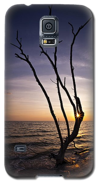 Galaxy S5 Case featuring the photograph Bonita Beach Tree by Bradley R Youngberg