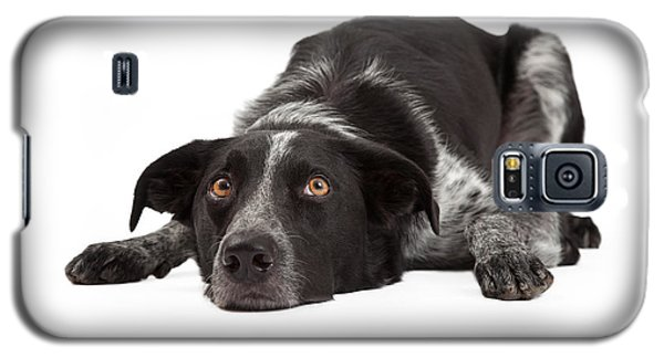 Border Collie Laying Head Down Galaxy S5 Case