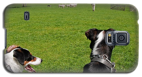 Galaxy S5 Case featuring the photograph Border Collies by Dennis Cox WorldViews