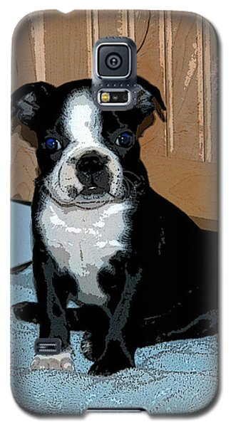 Galaxy S5 Case featuring the photograph Boston Terrier Art02 by Donald Williams