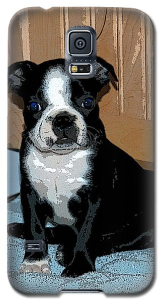 Boston Terrier Art02 Galaxy S5 Case by Donald Williams