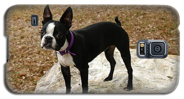 Galaxy S5 Case featuring the photograph Boston Terrier On The Rock by Donald Williams