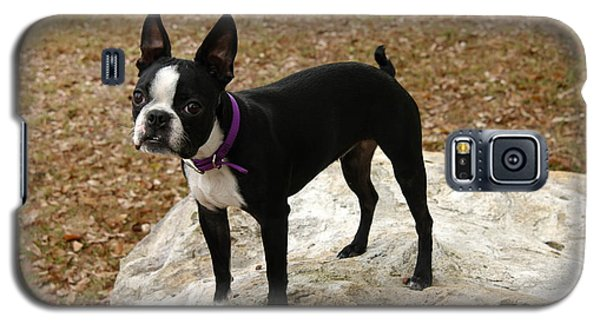 Boston Terrier On The Rock Galaxy S5 Case by Donald Williams