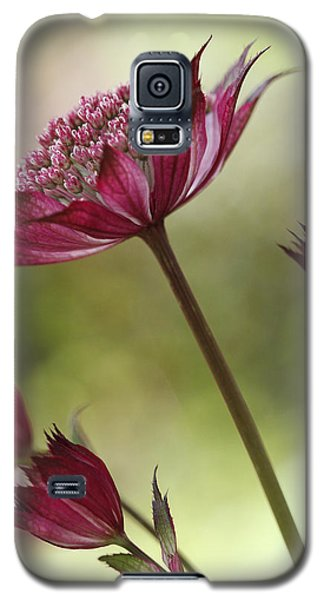Botanica Galaxy S5 Case