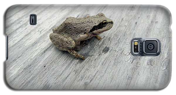 Galaxy S5 Case featuring the photograph Botanical Gardens Tree Frog by Cheryl Hoyle
