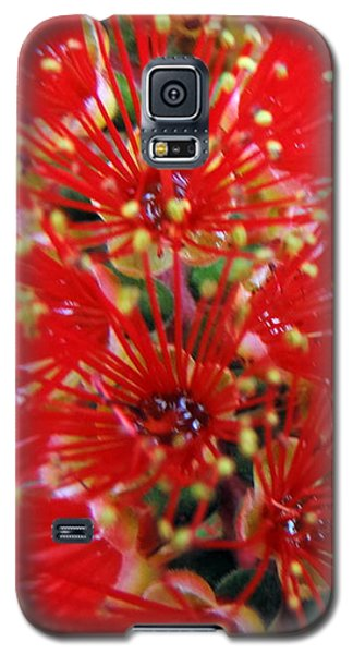 Bottle Brush Bloom Galaxy S5 Case