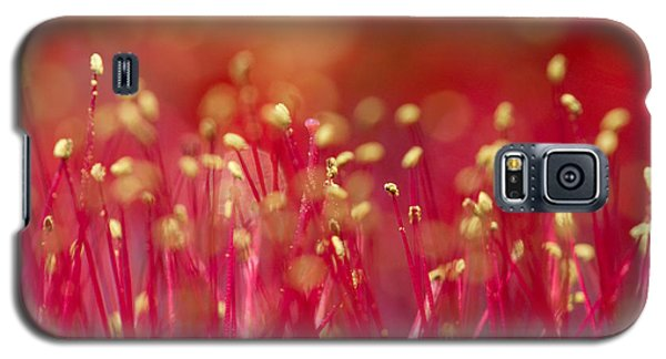 Galaxy S5 Case featuring the photograph Bottle Brush Stamens by Chris Scroggins