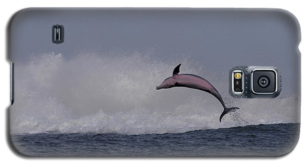Bottlenose Dolphin Photo Galaxy S5 Case