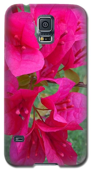 Bougainvillea Dream #2 Galaxy S5 Case