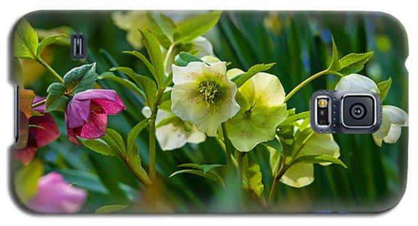 Galaxy S5 Case featuring the photograph Bouquet Of Lenten Roses by Jordan Blackstone