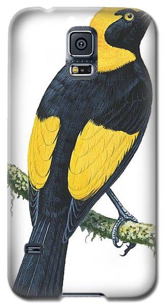 Audubon Galaxy S5 Case - Bowerbird  by Anonymous