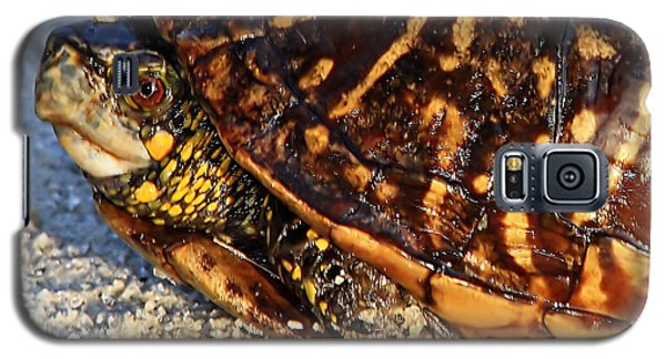 Box Turtle Galaxy S5 Case
