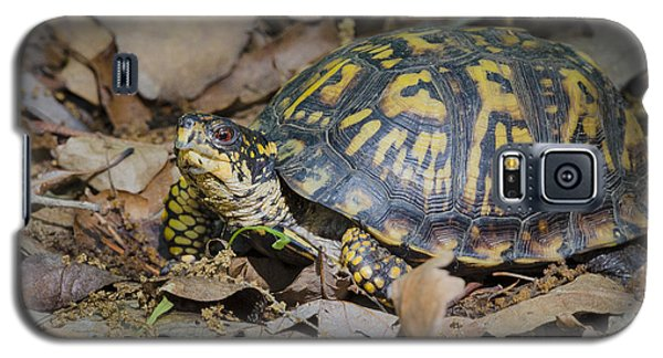 Box Turtle Sunning Galaxy S5 Case by Bradley Clay