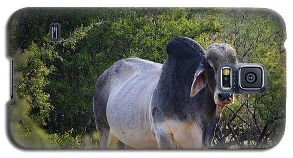 Brahma Cow Galaxy S5 Case