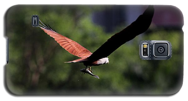 Brahminy Kite With Catch  Galaxy S5 Case
