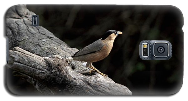 Brahminy Starling Galaxy S5 Case