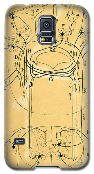 Brain Vestibular Sensor Connections By Cajal 1899 Galaxy S5 Case