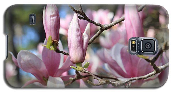 Saucer Magnolia Galaxy S5 Case - Branches And Magnolias by Carol Groenen