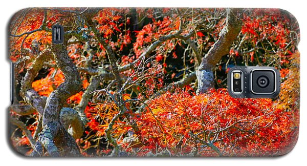 Branches Of Color Galaxy S5 Case by Cathy Dee Janes