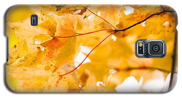 Branching Yellow Galaxy S5 Case by Melinda Ledsome