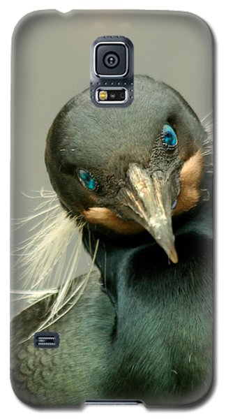 Galaxy S5 Case featuring the photograph Brandt's Cormorant by Bob and Jan Shriner