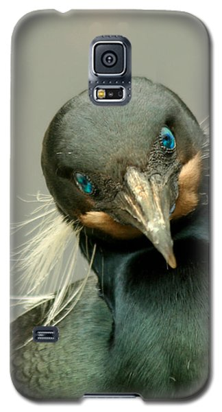 Brandt's Cormorant Galaxy S5 Case