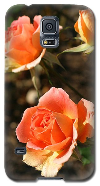 Brass Band Roses In Autumn Galaxy S5 Case by Living Color Photography Lorraine Lynch