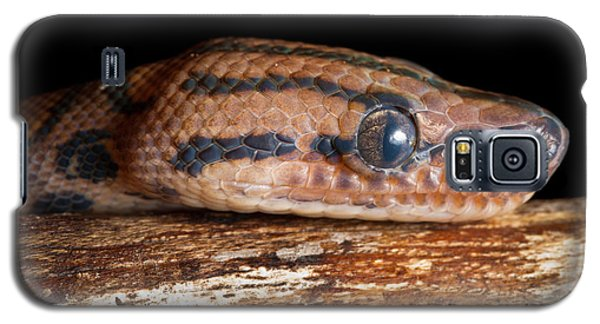 Galaxy S5 Case featuring the photograph Brazilian Rainbow Boa Epicrates Cenchria by David Kenny