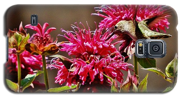 Galaxy S5 Case featuring the photograph Breakfast At The Bee Balm by VLee Watson