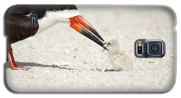 Black Skimmer And Chick. Galaxy S5 Case