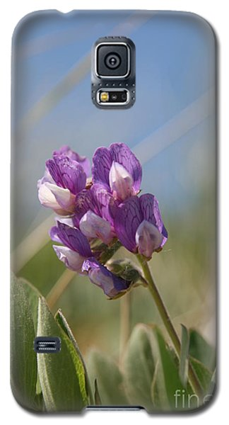 Breathe In The Air No.2 Galaxy S5 Case