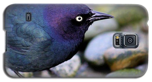 Brewers Blackbird Galaxy S5 Case