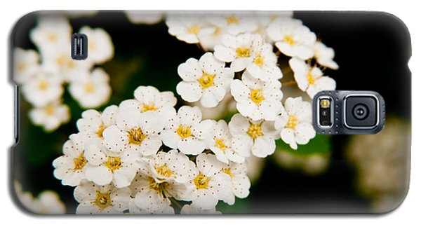 Bridal Veil Spirea Galaxy S5 Case by Brenda Jacobs
