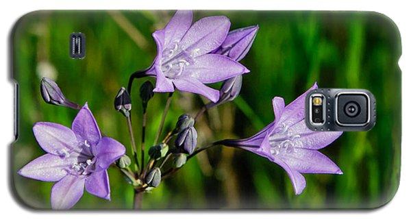 Galaxy S5 Case featuring the photograph Bridges' Triteleia by Jim Thompson