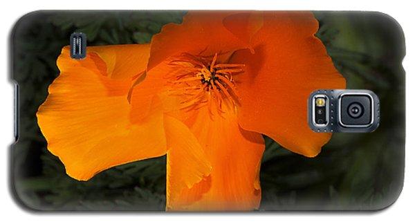 Bright California Poppy Galaxy S5 Case