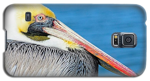 Galaxy S5 Case featuring the photograph Bright Eyed Pelican by Pamela Blizzard