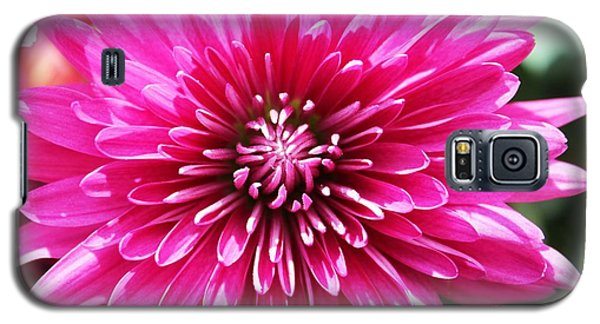 Galaxy S5 Case featuring the photograph Bright Pink Mum by Judy Palkimas