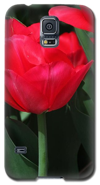 Bright Red Tulip Galaxy S5 Case by Bill Woodstock