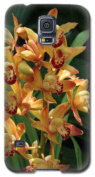 Bright Summer Flowers Galaxy S5 Case by Bill Woodstock