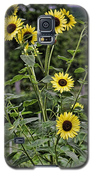 Galaxy S5 Case featuring the photograph Bright Sunflowers by Denise Romano