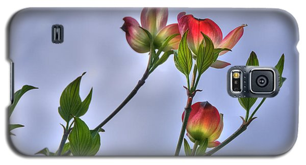 Brillant Springtime Galaxy S5 Case by Wanda Krack