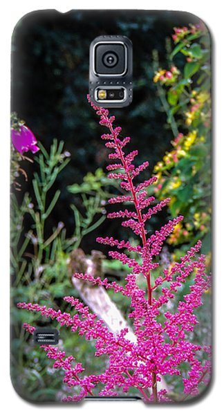 Brilliant Astilbe In Markree Castle Gardens Galaxy S5 Case