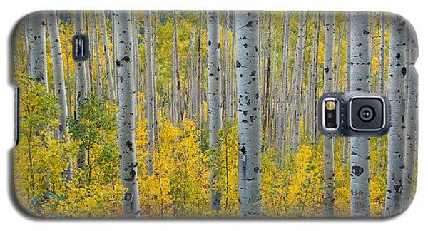 Brilliant Colors Of The Autumn Aspen Forest Galaxy S5 Case