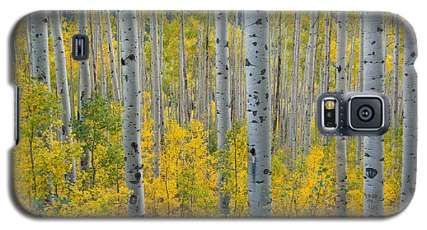 Brilliant Colors Of The Autumn Aspen Forest Galaxy S5 Case